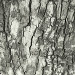 BW Tree bark