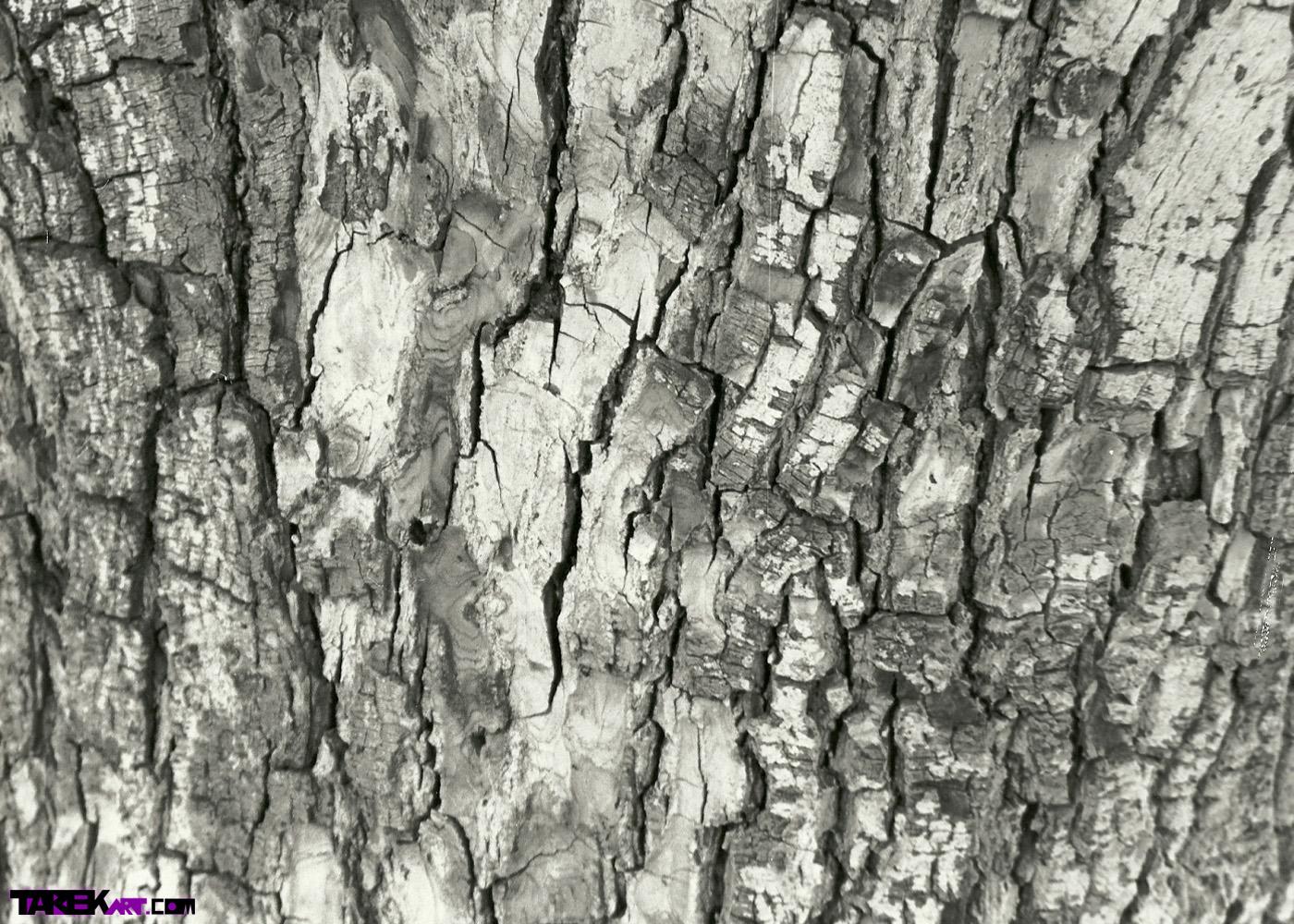 enjoy your assed bark machine