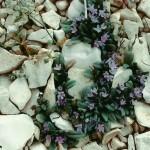 Wild Flower01