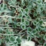 Wild Flower02